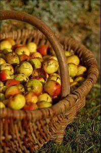 Hottee de pommes